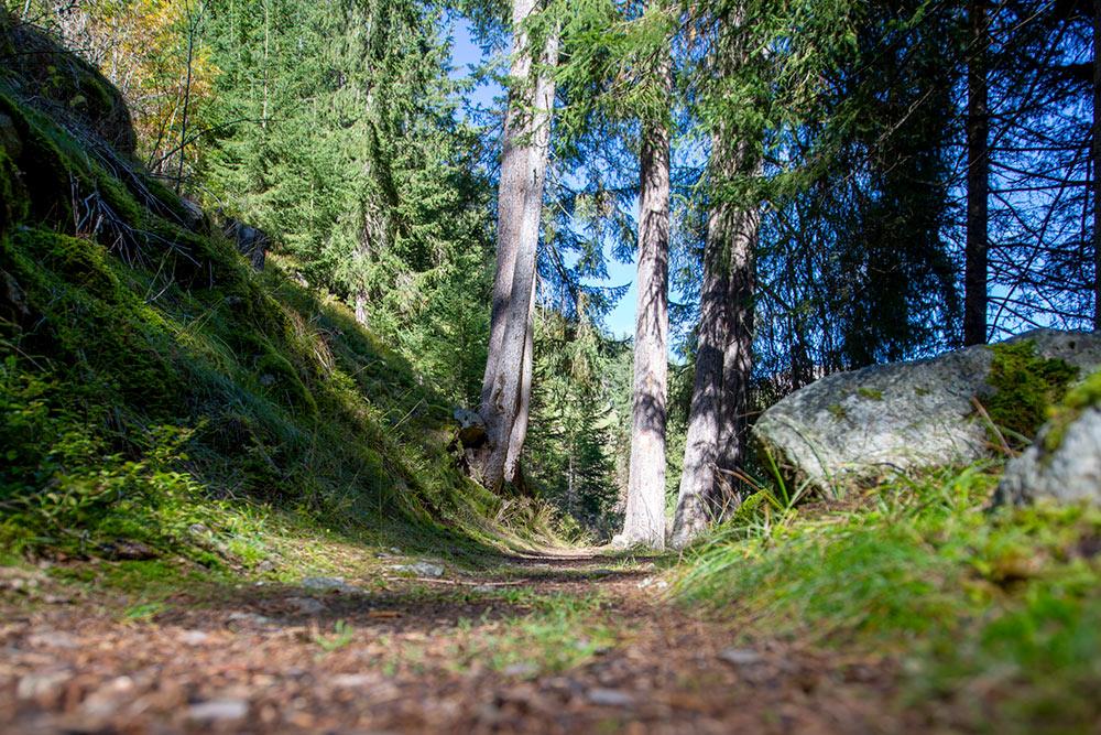 escursioni-vista-valle-agriturismo-bauernhof-taisten-hiking-farm